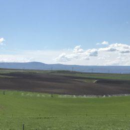 Crown Farm Outback